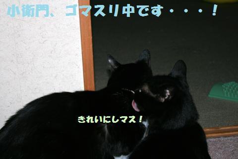 011_convert_20120605193517.jpg