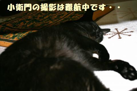 012_convert_20120522213359.jpg