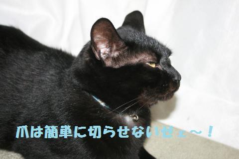 013_convert_20120524221420.jpg