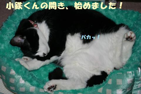 013_convert_20120530215153.jpg
