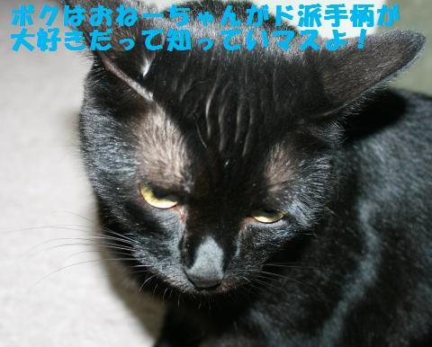 014_convert_20120915224354.jpg