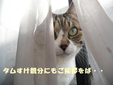 016_convert_20120317203134.jpg