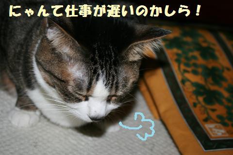 016_convert_20120506205424.jpg