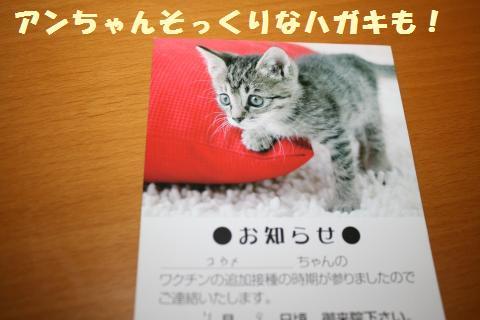 016_convert_20120703182401.jpg