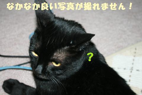 017_convert_20120518230224.jpg