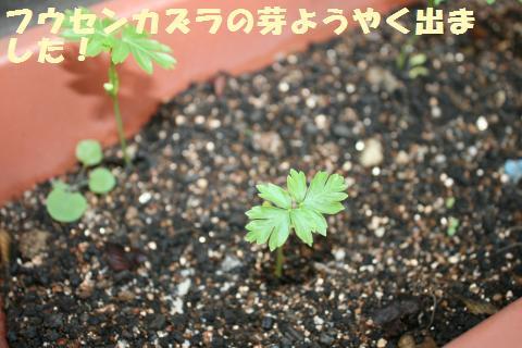 017_convert_20120708164157.jpg