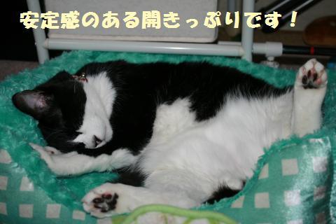 019_convert_20120530215315.jpg