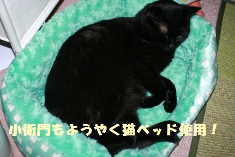019_convert_20121202205845.jpg