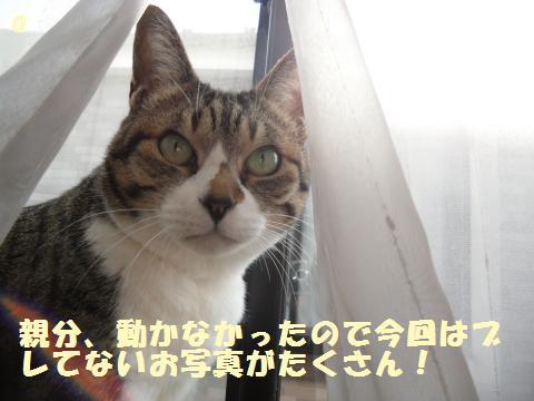 020_convert_20120317203228.jpg