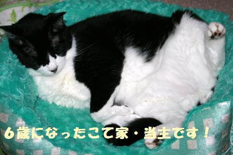 022_convert_20120924164737.jpg