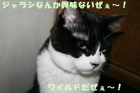 026_convert_20120321225952.jpg