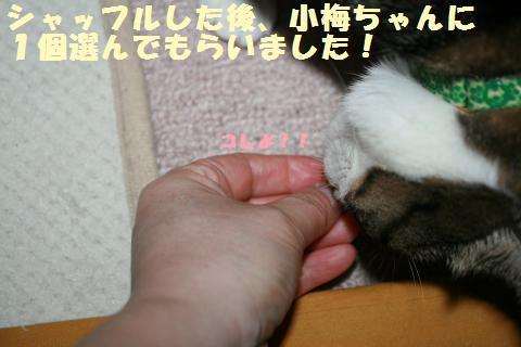 027_convert_20120517200309.jpg