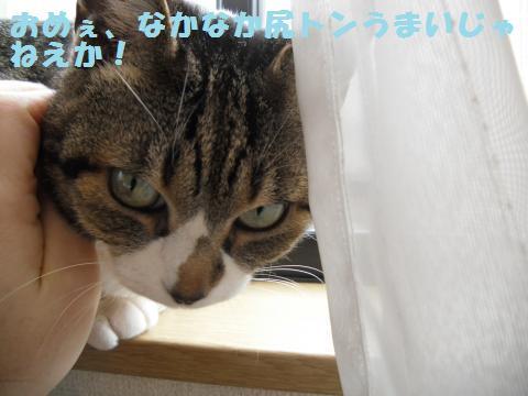 030_convert_20120317203319.jpg