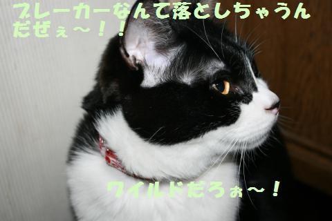030_convert_20120321230054.jpg