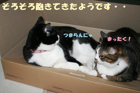 031_convert_20120515223436.jpg