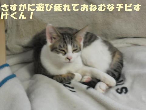 034_convert_20120317203412.jpg