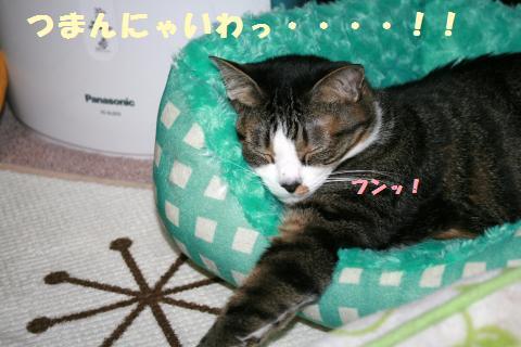 034_convert_20120524220746.jpg