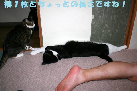 035_convert_20120622215103.jpg