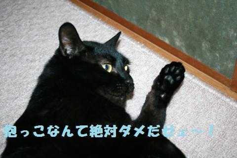 036_convert_20120524221556.jpg