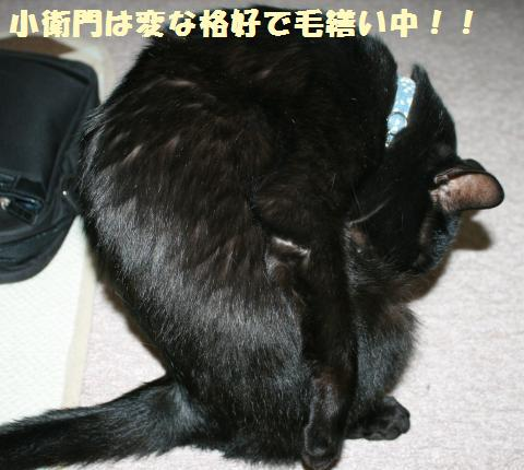 037_convert_20120616221851.jpg