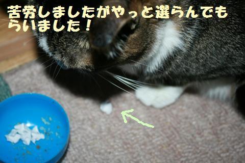 048_convert_20120517200836.jpg