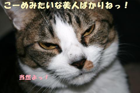 052_convert_20121006230222.jpg