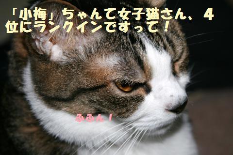 053_convert_20121006230313.jpg