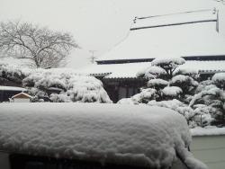 雪の日 011