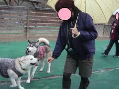 060_20101103220459.jpg