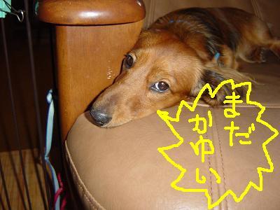 ケ・ソファ寝3