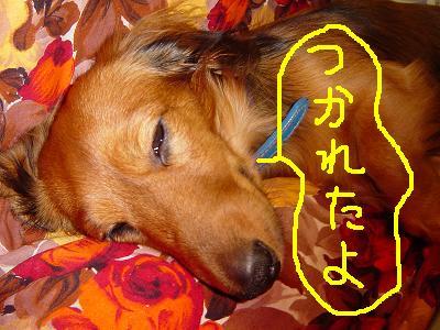 ケ・こたつ寝2