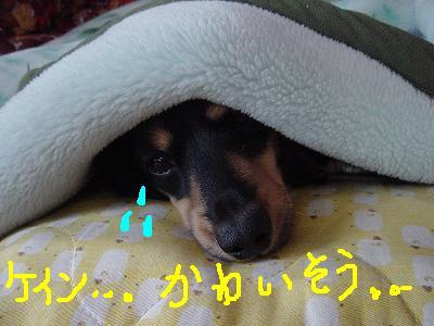 こ・毛布1