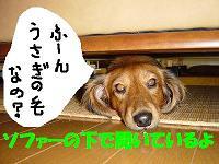 ケ・ソファ下(正面2)1