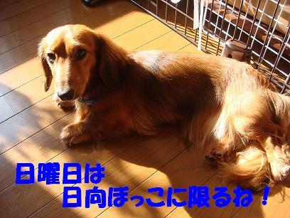 け・日向ぼっこ1