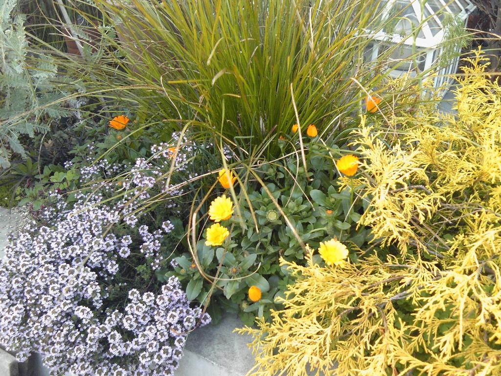 吉谷さんの屋上ガーデン