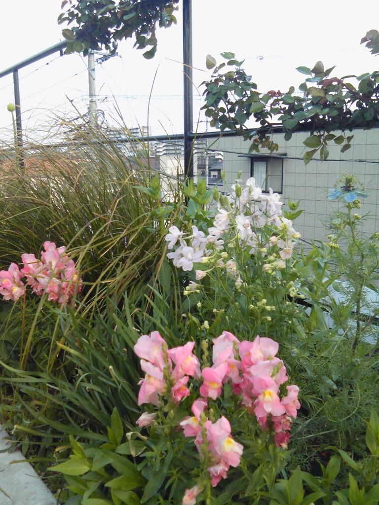 吉谷さんの屋上ガーデン#2