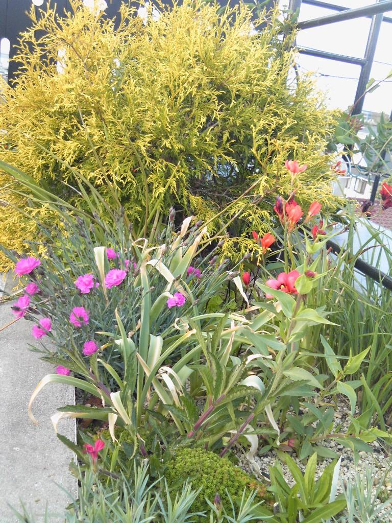 吉谷さんの屋上ガーデン#3