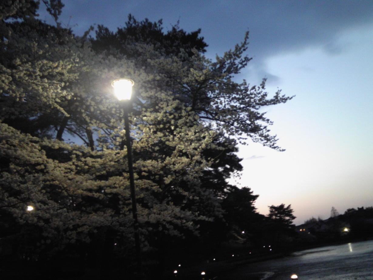 大宮公園2011_04#3