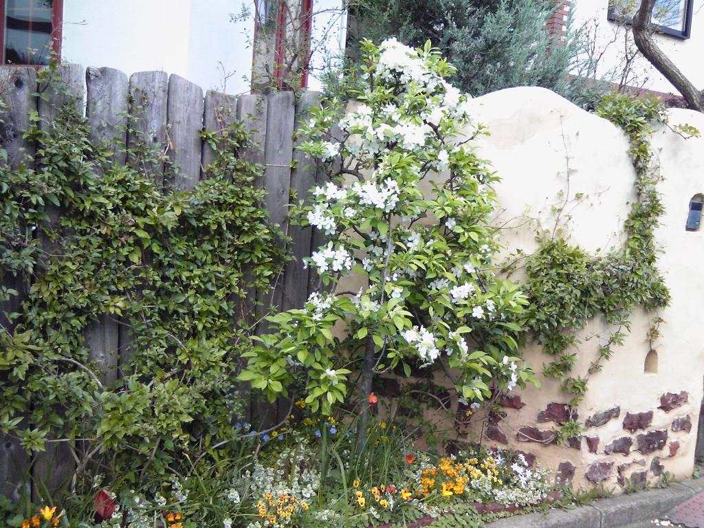 Mさんの庭#2