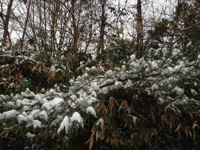 わたぼうし:雪