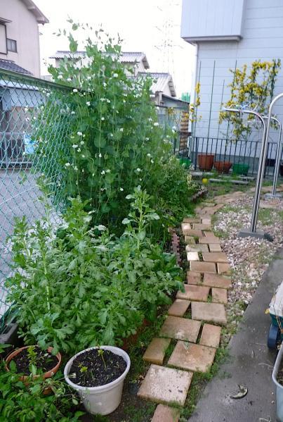 2011.04.17-春の庭