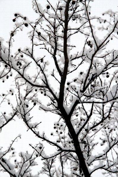 snow sarusuberi