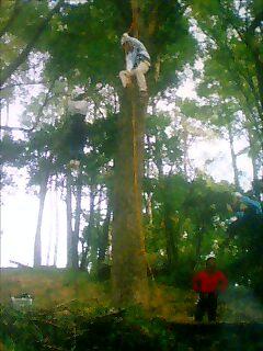 エバグリ木登り