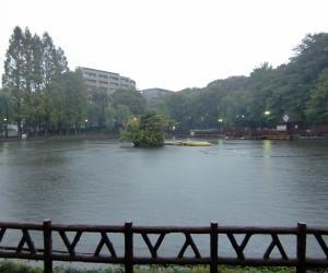 雨にけむる見次公園