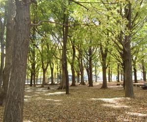 秋の城北公園①