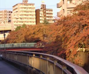 秋の石神井川