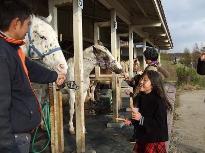 馬に餌を2