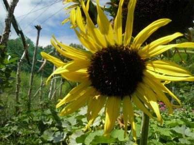 屈斜路湖周辺8月の花