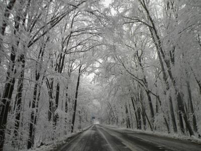 樹氷の芸術