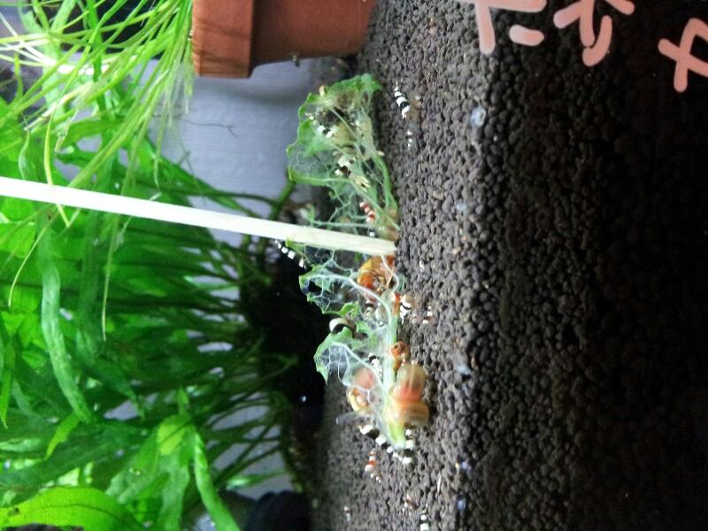 fc2blog_20121030122104bdb.jpg